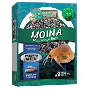 Moina macrocopa product back product packaging back side