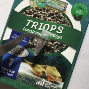 Triops eggs for sell