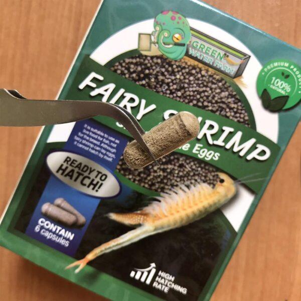 Fairy Shrimp Sirindhornae eggs capsule