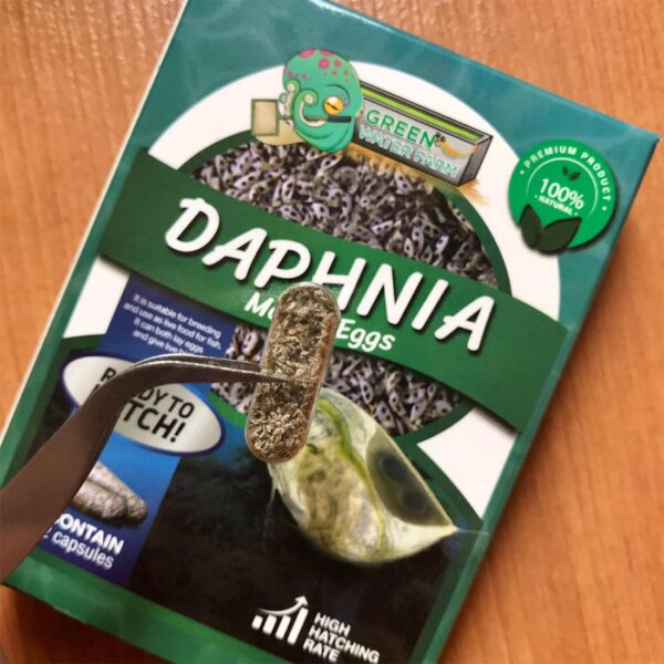 Daphnia magna eggs capsules