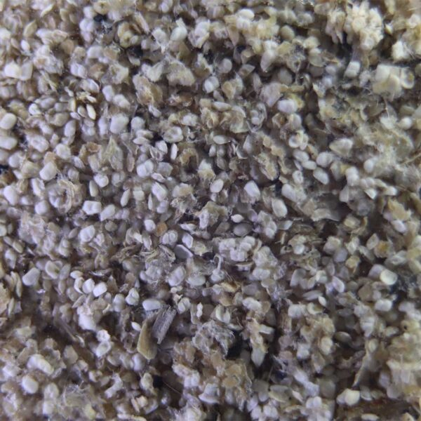 Water flea eggs for hatch